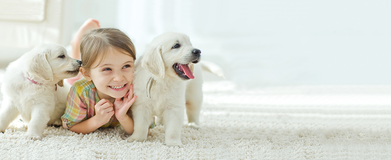 Products for Pet Parents