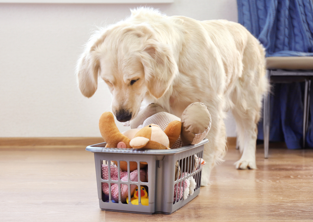 5 Chew Toys Your Dog Will Love
